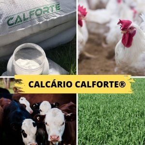 Calforte